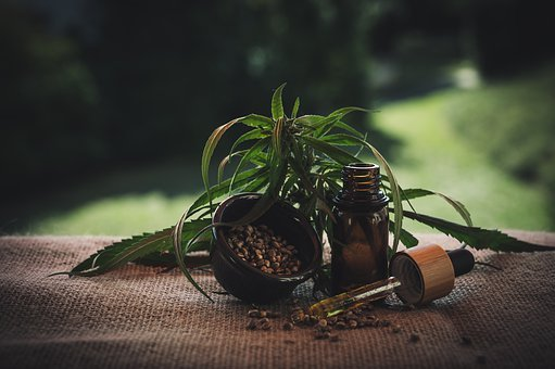 The Right Way to Give Pets CBD Oil